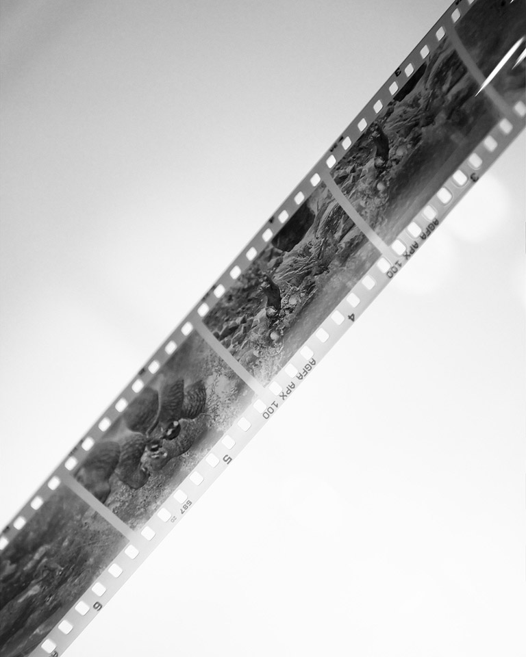 Developing 35mm black and white film