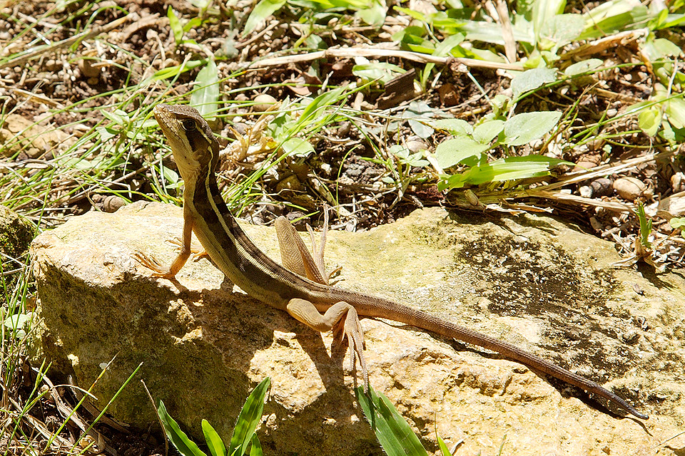 Butterflies Lizards And Green Impressions Photoscapes